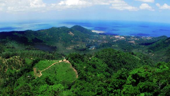 Koh Samui Jungle