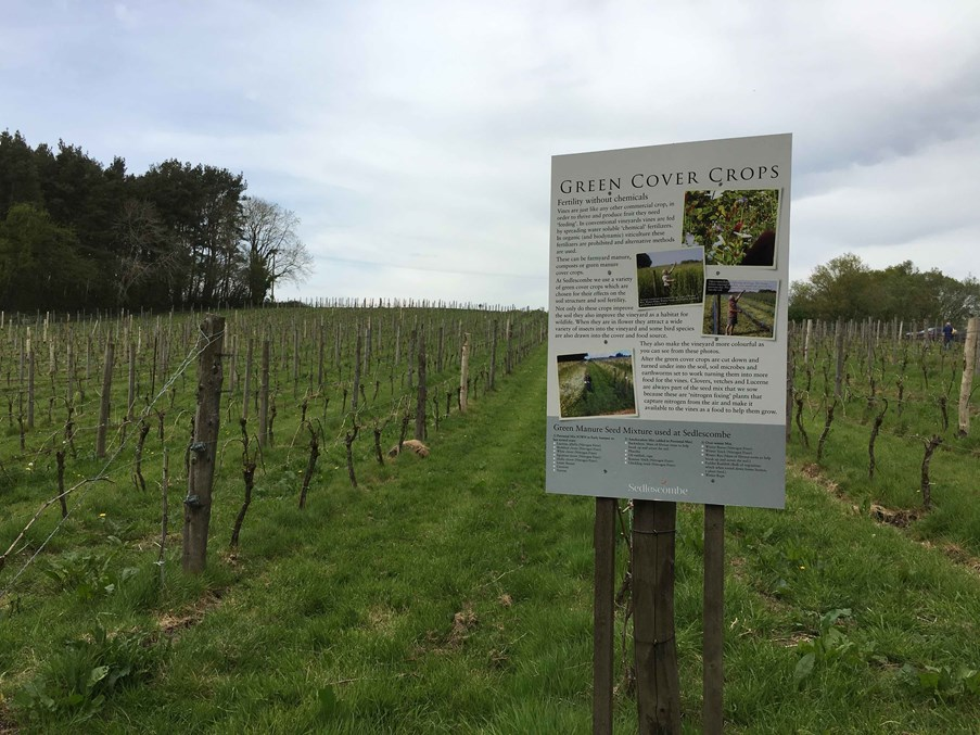 Sussex vineyard