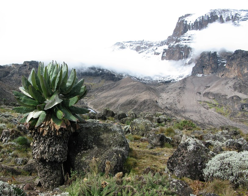 Vegetation on Mount Kilimanjaro