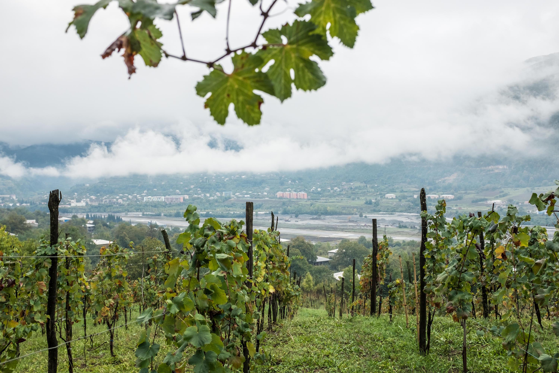 top wine destinations